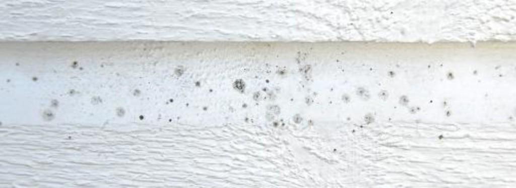 svertesopp-må jeg male huset